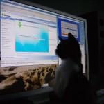 Bandit, The Computer Cat